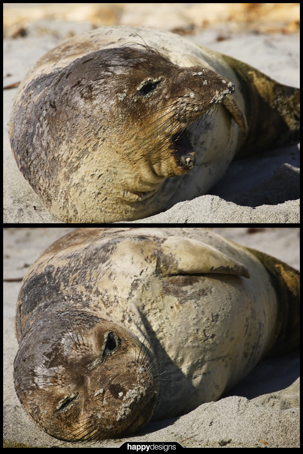 20090213 - Gyro seal is PISSED