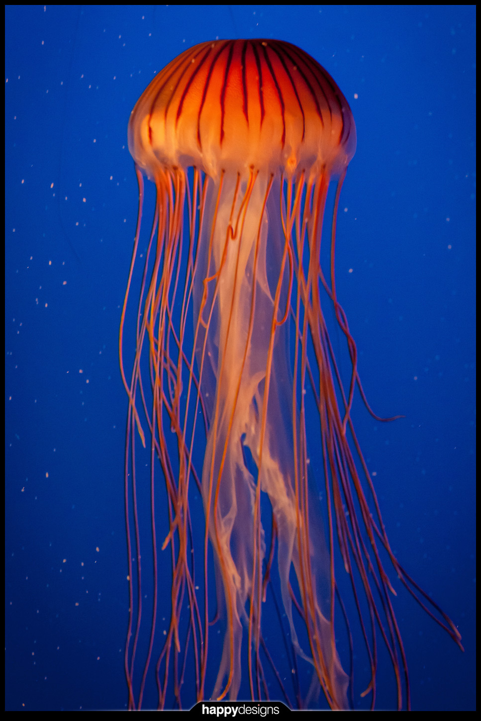 20130813 - little Miss Jellyfish (and other adventures)-0003