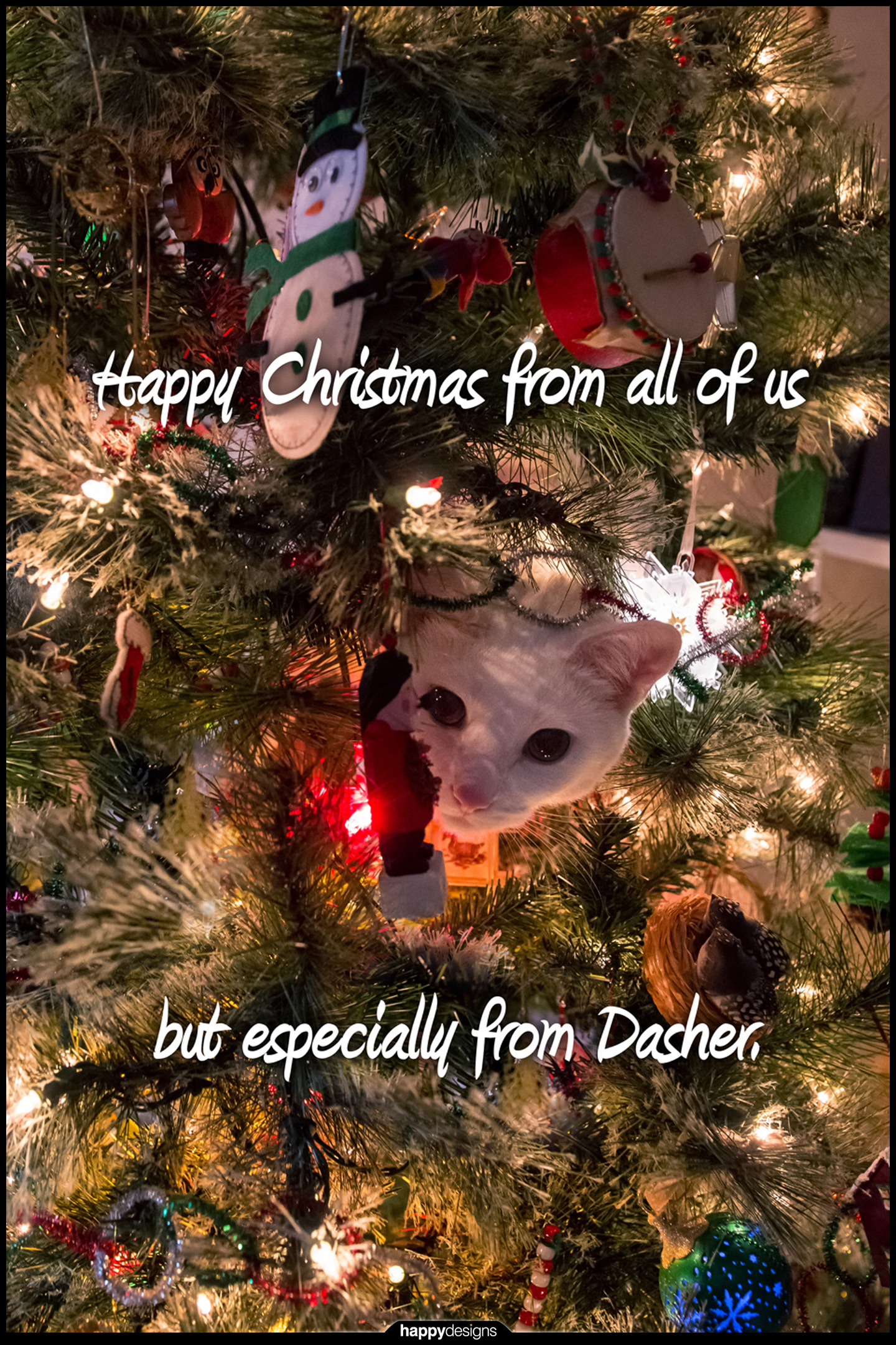 20141222 - Dasher IN the Christmas tree