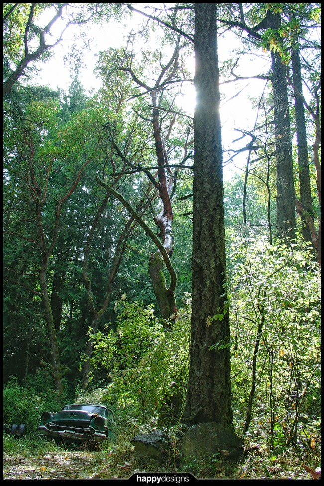 20060418 - Simon's Forest