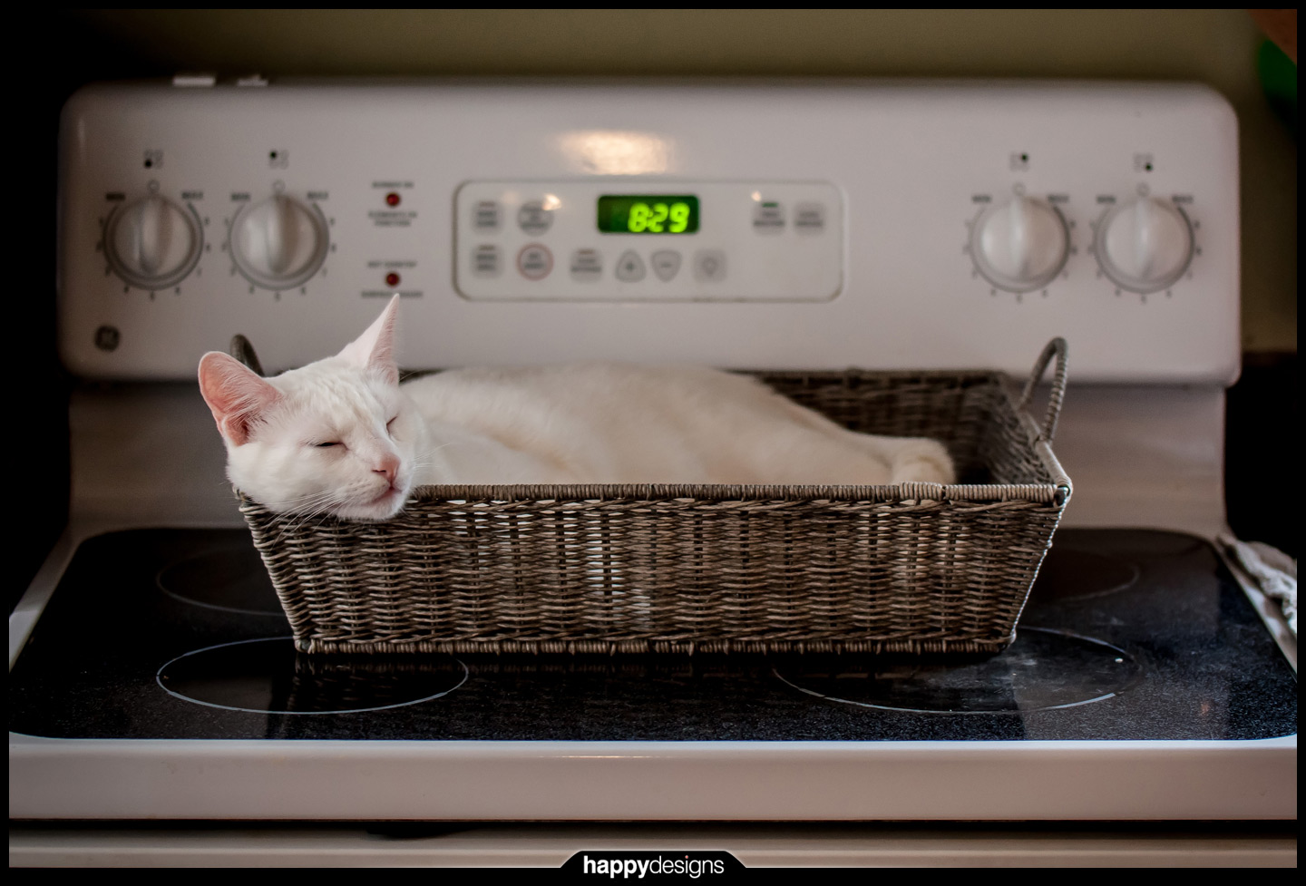 20140107 - Dasher on the oven basket-0001