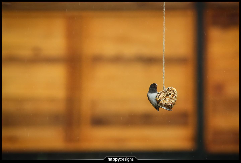 20140819 - heart-shaped birdie